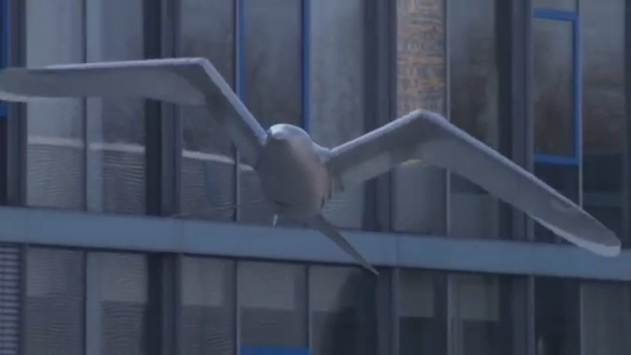 This Bionic Seagull Takes Flight In China