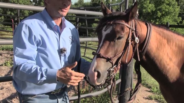 1512 Introducing the snaffle bit