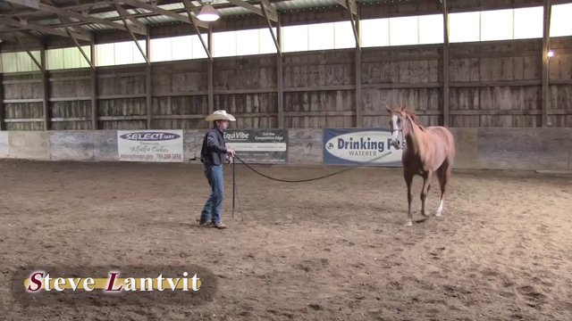 1513 Teaching a horse to lunge
