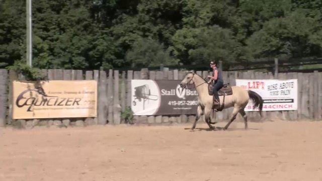 1606 The Standing and posting trot