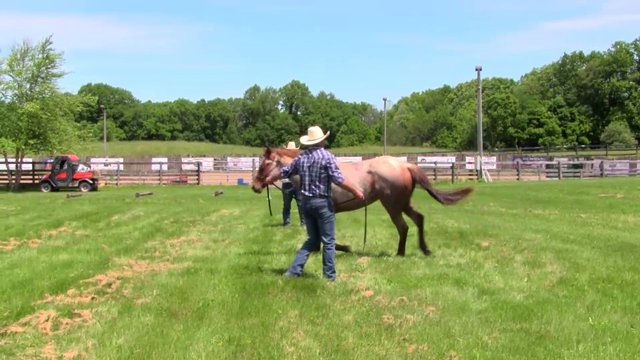 1805 Inhand exercises for the young horse part 1