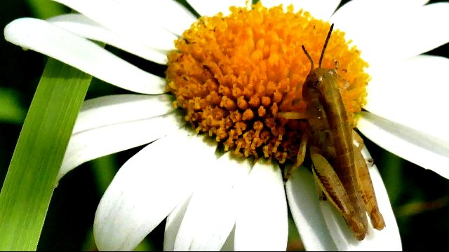 The Beautiful relationship between Flowers and Insects.