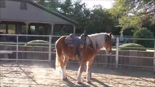 Episode 1 Problem Solving-Horse Won't Stand Still To Mount
