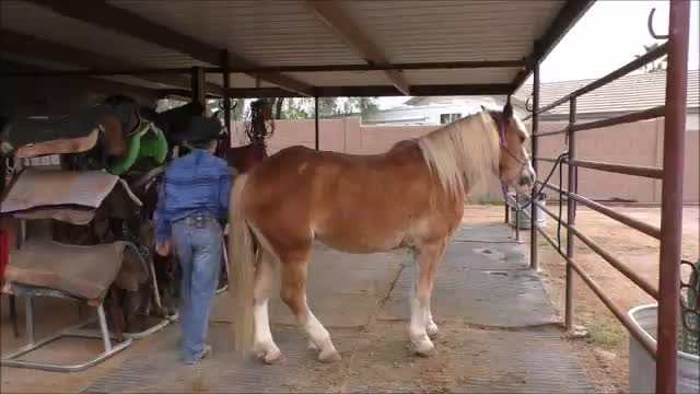 Episode 7 Horsemanship Wisdom-The Grooming Routine