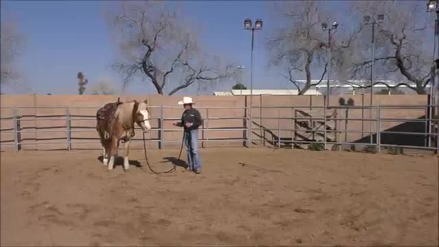 Week 4 Horsemanship Tip of the Week-Lazy Horse that ignores go forward pressures
