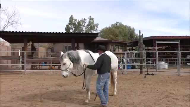 Episode 4 Reality Stormy Step 3 Lesson 6 Disengage Hindquarters with Rope