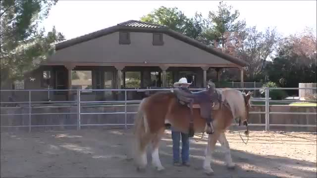Episode 2 Instructional Horse Training-Step 4 Overview and Lesson Summary
