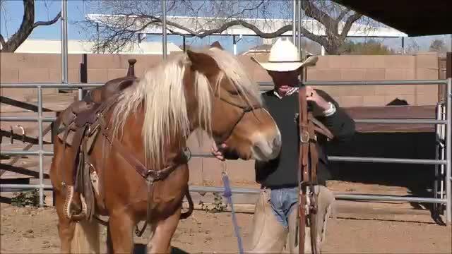 Episode 9 Horsemanship Wisdom-Putting a Bridle on Your Horse