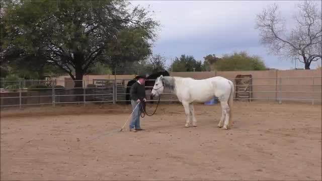 Episode 4 Desensitizing Lesson 3 Stormy-Stick and Lariat Part 1