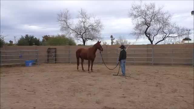 Episode 4 Desensitizing Bronco Lesson 3 Stick, Lariat Part 1