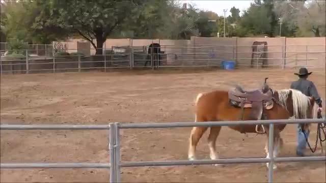 Episode 10 Horsemanship Wisdom-Pre Flight Routine Part 1