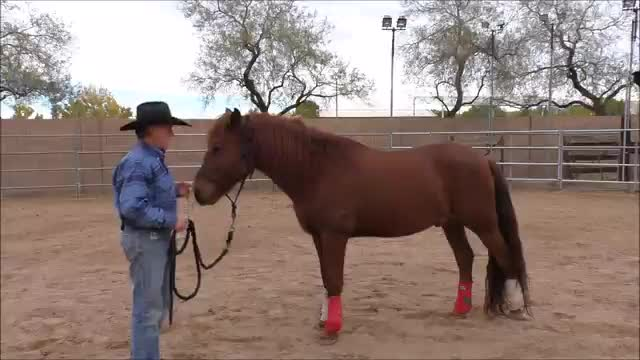 Episode 5 Instructional Step 2 PreGroundwork Lesson 3 Footfall at Trot Part 1