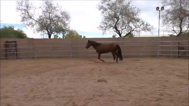 Episode 5 Instructional Step 2 PreGroundwork Lesson 3 Footfall at Trot Part 2