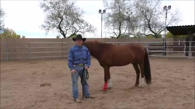 Episode 6 Instructional Step 2 PreGroundwork Lesson 4 Footfall at Lope Left Lead Part 1