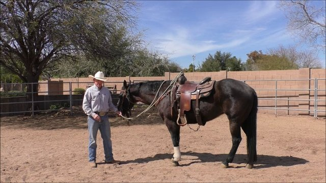 Week 6 Tip of the Week-Teaching Your Horse to Back Up