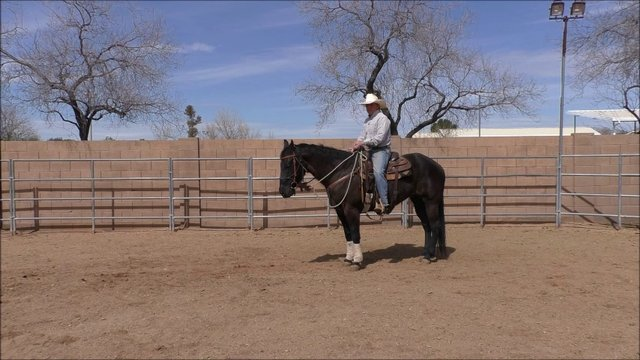 Week 6 Tip of the Week Getting Horse to Back Up Part 2