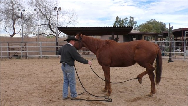 Episode 4 Reality Training Bronco Step 3 Lesson 5 Ropes on Feet