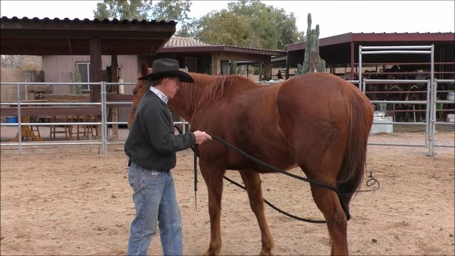 Episode 4 Reality Training Bronco Step 3 Lesson 6 Disengage Hindquarters with Rope