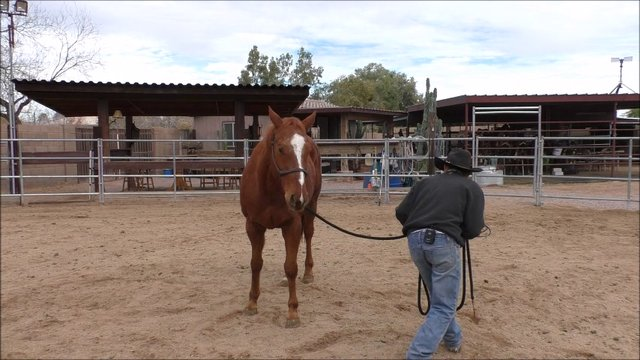 Episode 4 Reality Training Bronc Step 3 Lesson 7 Look Hindquarters Away