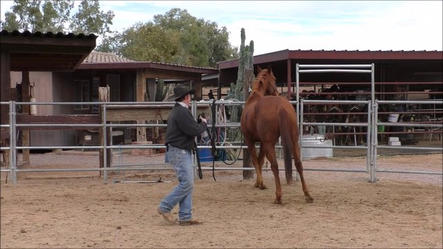 Episode 4 Reality Training Bronco Step 3 Lesson 8 Poll Pressure Exercise