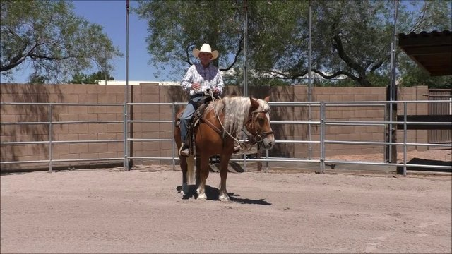 Episode 9 Instructional Step 2 Independent Seat Lesson 1 The Three Rein Positions