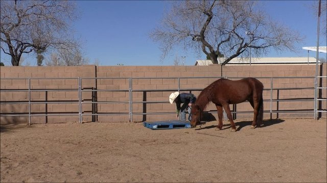 Episode 5 Problem Solving Mark-Stepping Horse Up Into Trailer