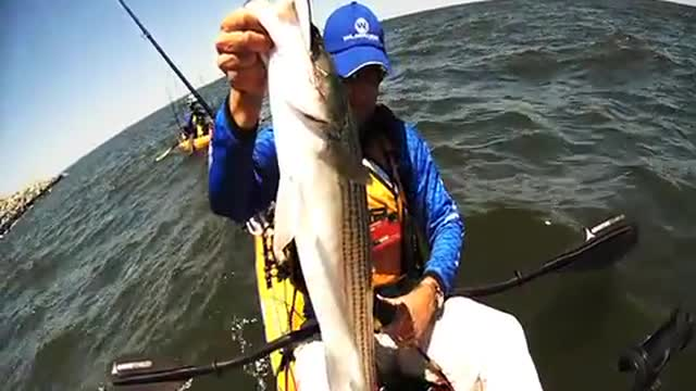 Pulling Striped Bass Out of Rip Rap with an X Rap