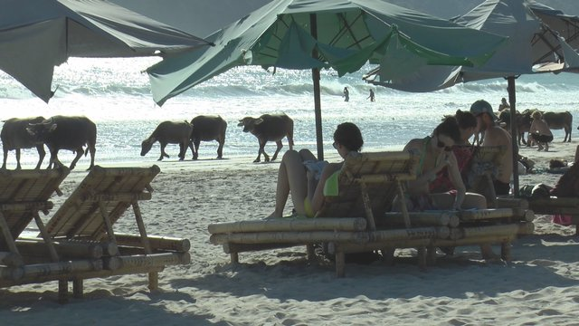 Buffaloes in the secret beach (1)