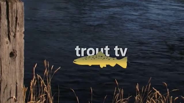 Black Hills Trout