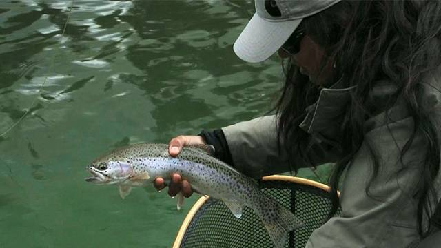 Chironomid Fishing w/ Brian Chan in BC
