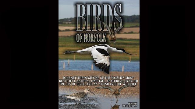 Birds of Norfolk Part 1