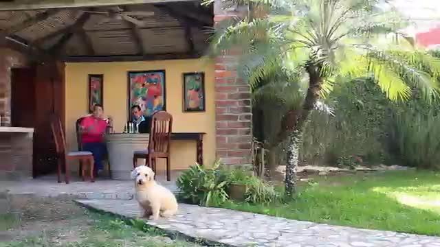 EL SINDROME DE PETER PAN EPISODIO 4