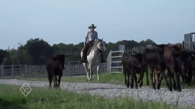 EP769 - Horsemanship Stories: Bandy Stevenson