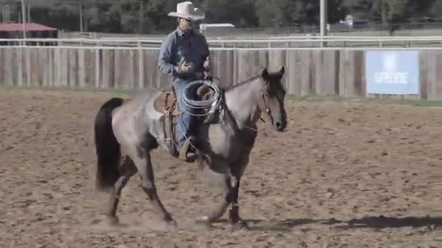 Dry_Work_for_Team_Roping