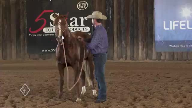 EP811_WorkingWithAYoungYearlingStallion_Part2