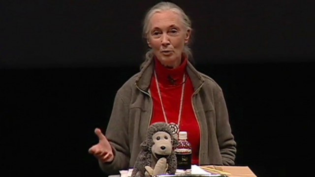 Jane Goodall helps humans and animals live together