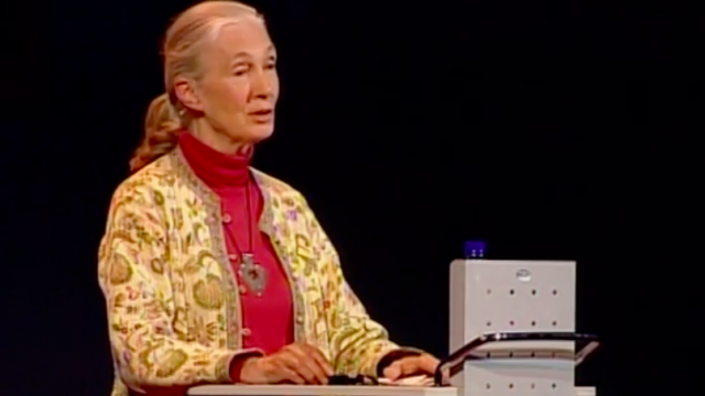 Jane Goodall on what separates us from the apes