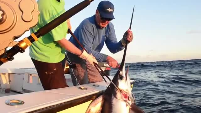 Daytime Swordfish - The Fight and Catch