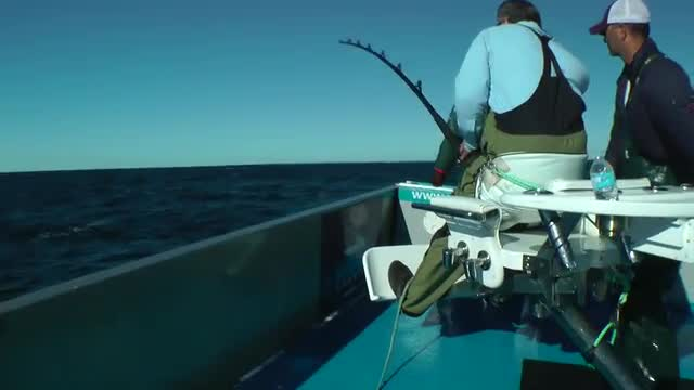 Giant Bluefin Tuna  - The Battle