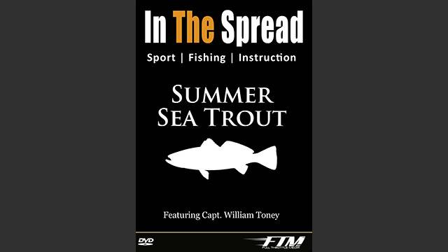 Summer Sea Trout Fishing