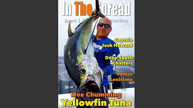 Yellowfin Tuna Live Chumming
