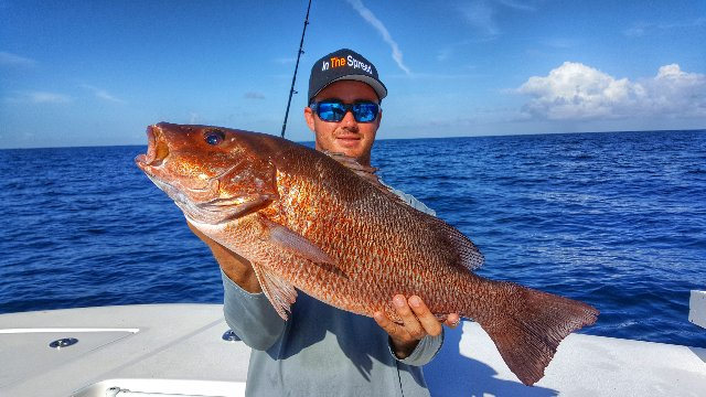 Chumming for Mangrove Snapper
