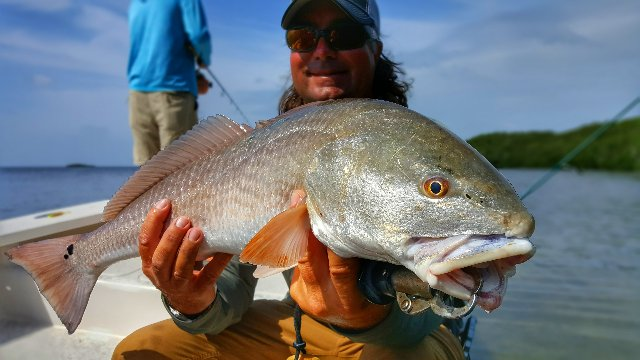 Live Bait Tactics for Pressured Redfish
