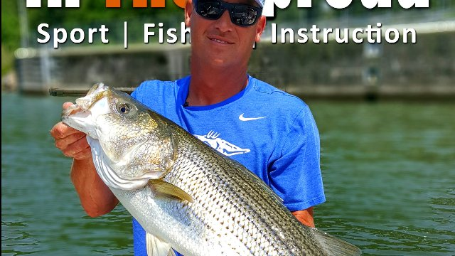 Striper Fishing Boils and Locks