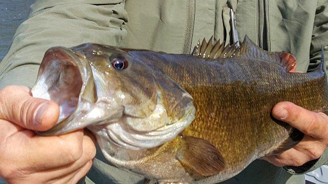 River System Bass Fishing Gear Primer