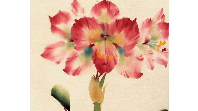 Amaryllis from 108 Flowers Book 1: Lesson #8002